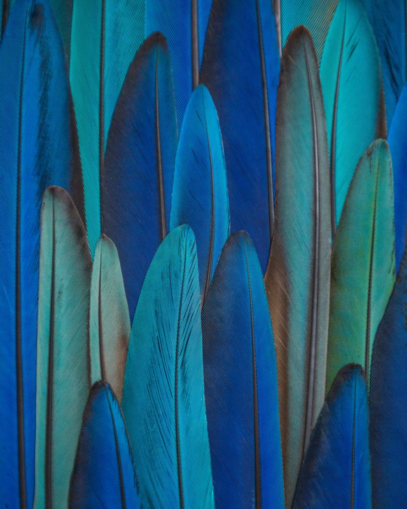 mosaïque de plumes, détails du tableau Paysage